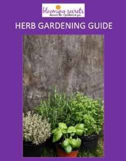 Sign up for the newsletter and get a bonus Herb Growing Guide