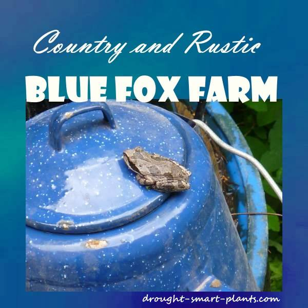 Country and Rustic; Blue Fox Farm