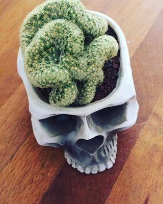 Brain Cactus in a Skull Planter
