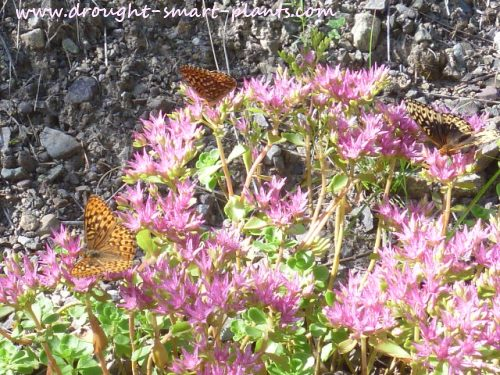 Find out what other plants butterflies love...
