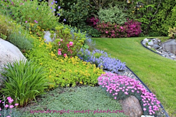 Buy flower garden plans let me help design your drought for Help design my garden