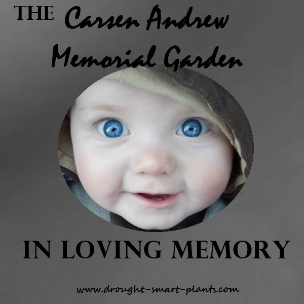 Missing our lovely boy, Carsen Thomas, every day...
