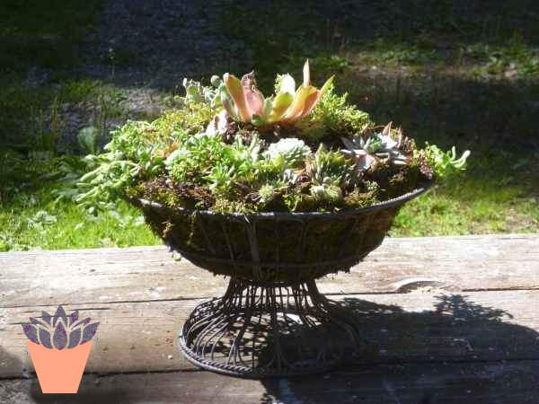 Wire Fruit Basket lined with moss