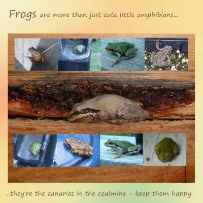 Frogs are my favorite amphibians...