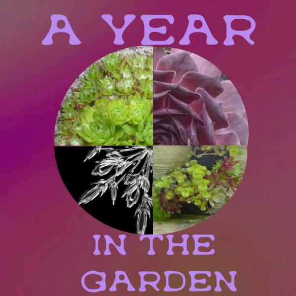 A Year in the Garden...