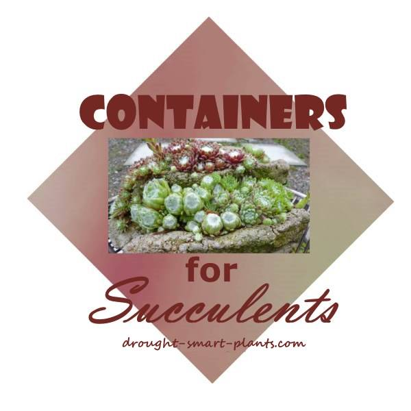 Containers for Succulents