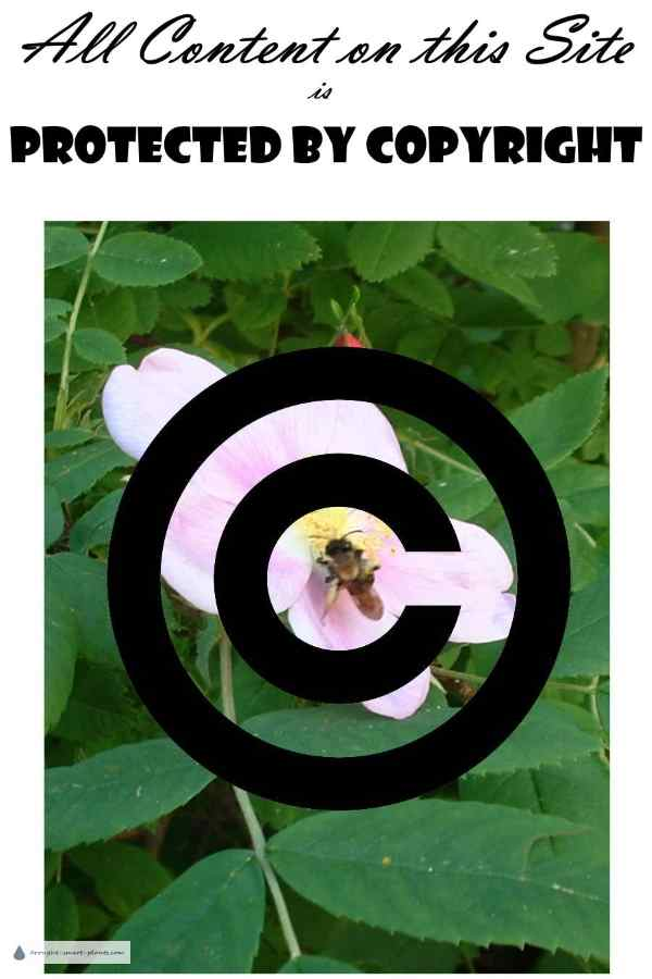 All Content on This Site is Protected by Copyright