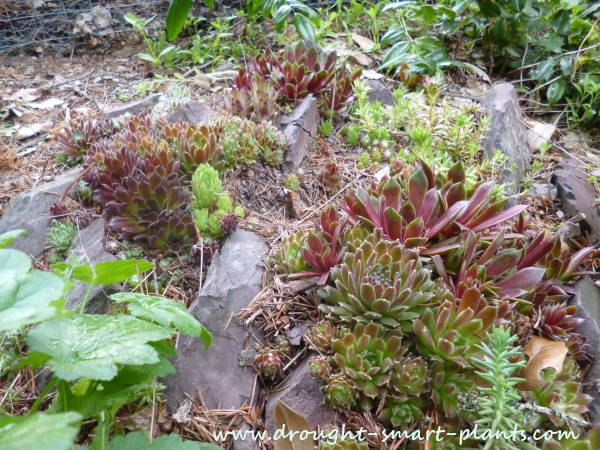 how to make a rock garden with succulents