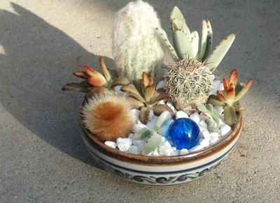 A preserved cactus husk and a blue plastic ball add appealing round shapes to this plant-packed design.