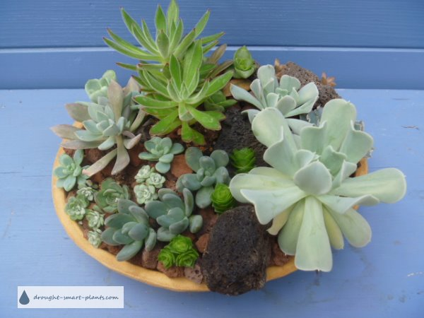 Dish Garden with mixed succulents