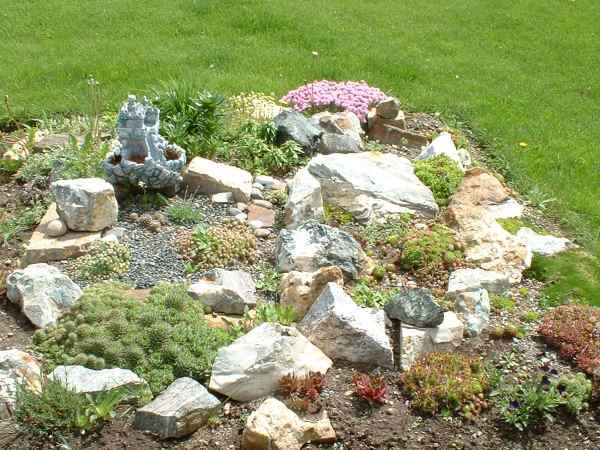 Sempervivum and other succulents in a Rock Garden