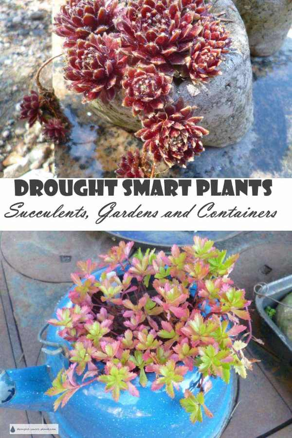 Succulents, Gardens and Containers