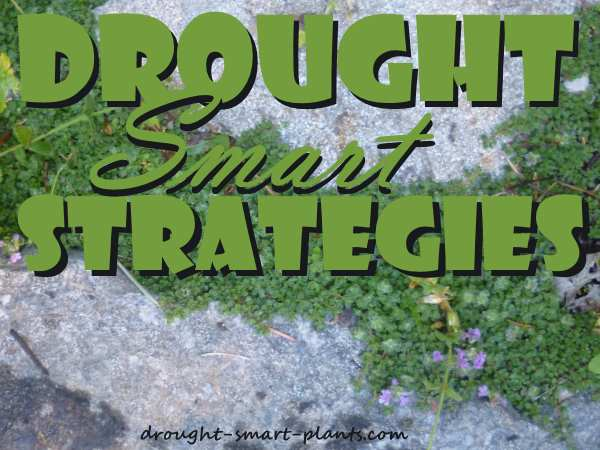 Drought Smart Strategies; the many ways that plants fight drought; learn how you can help your plants survive...