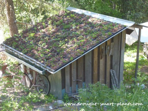 The modular green roof in July 2013 - almost a full year and one renovation in...