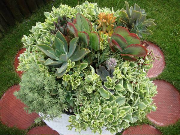 Louise has some gorgeous succulent planters