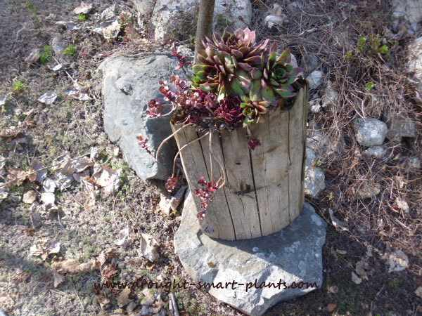 Fence Post Planter