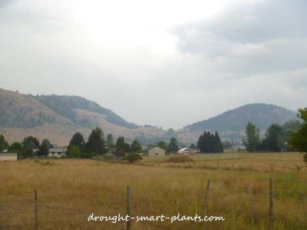 wildfire on Galena Mountain, Grand Forks BC