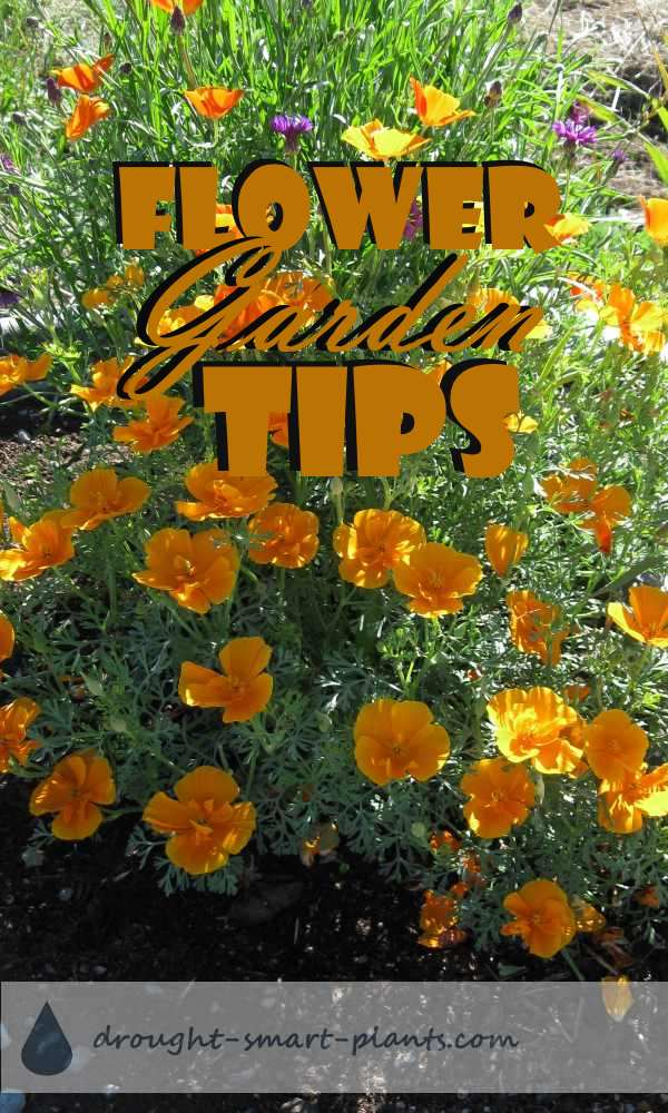 Flower Garden Tips for the best flowers ever...