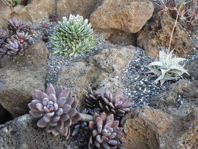 Drought Smart Plants
