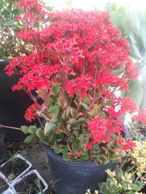 My Dad Got Some Plants In The Nursery But Not Sure What They Are We Think Succulents Flowers Orange Red Or Yellow
