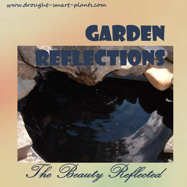 Garden Reflections - The Beauty Reflected