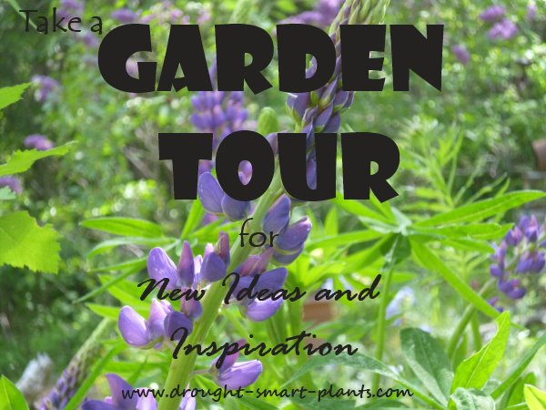 Garden Tour - see the xeriscaping demonstration gardens in action