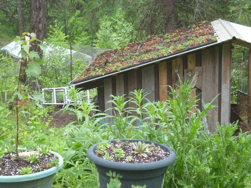 The modular green roof is finished it's renovation; finally...