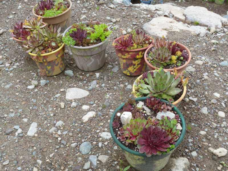 More Camouflage Pots in different colors; now there's a whole rainbow...