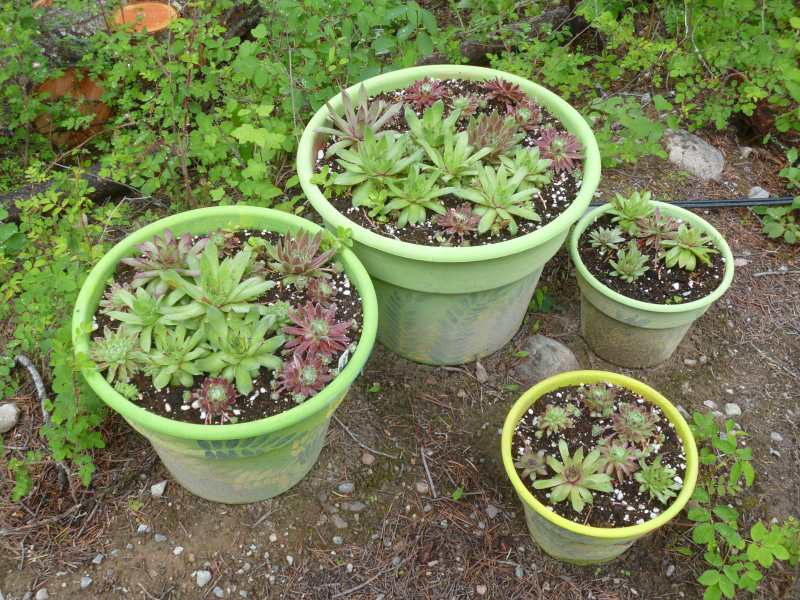 ...and then there are green pots - is there no end?
