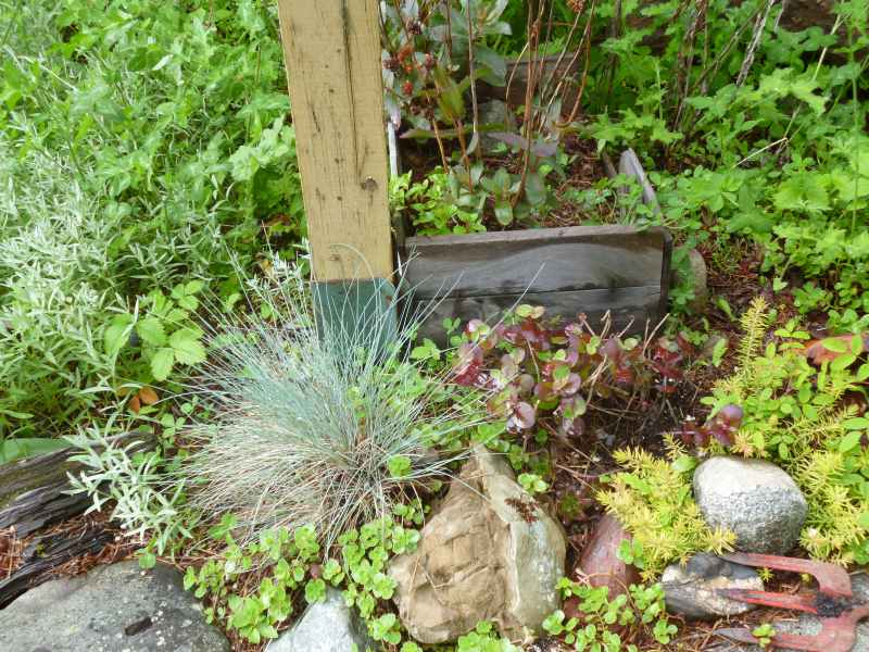 Hardy succulents, grasses and drought tolerant perennials all mesh well