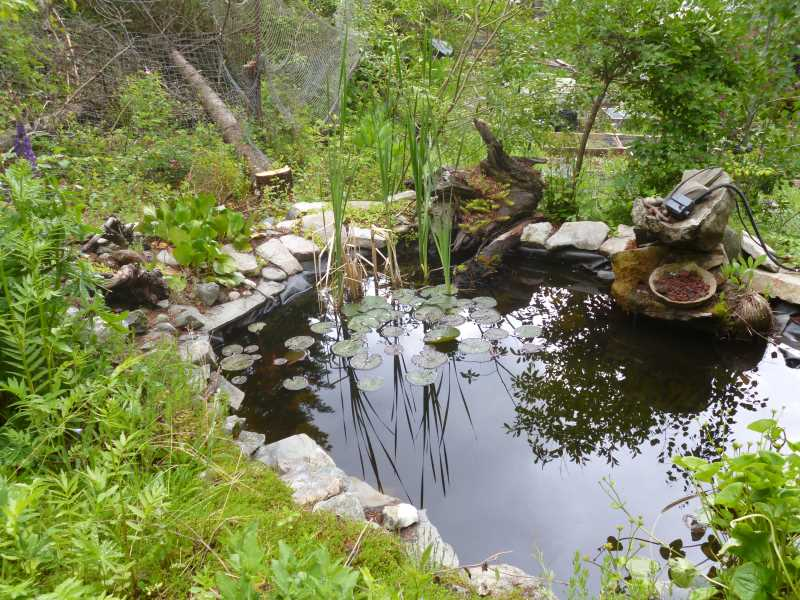 Tranquil ecosystem pond