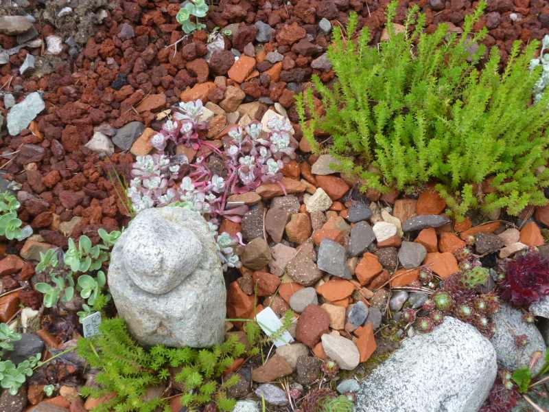 Special groupings with Sedum, interesting rocks and found items abound