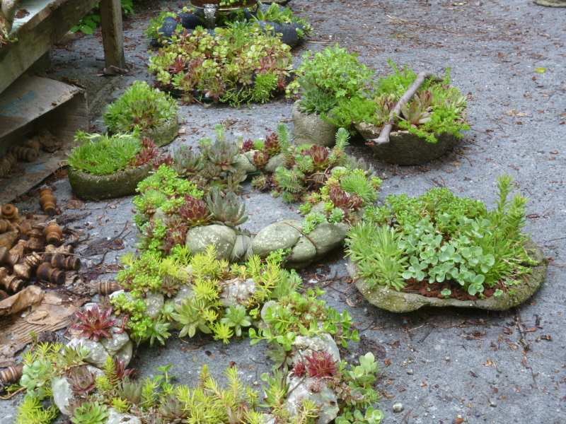 Rustic crafts fill in nicely with hardy succulents