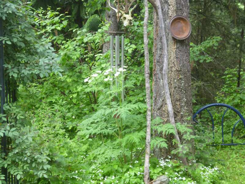 A skull and sweet cicely decorate the wind chimes
