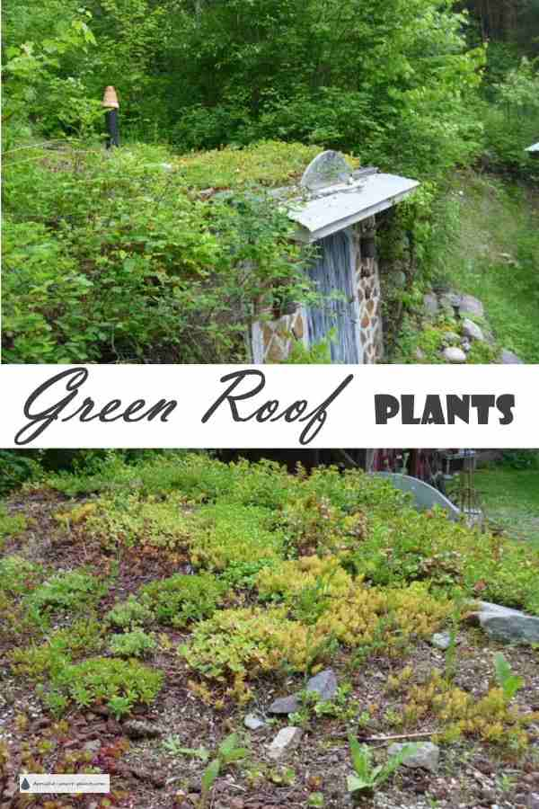 Green Roof Plants...