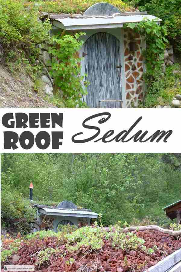 Green Roof Sedum - short and drought tolerant...