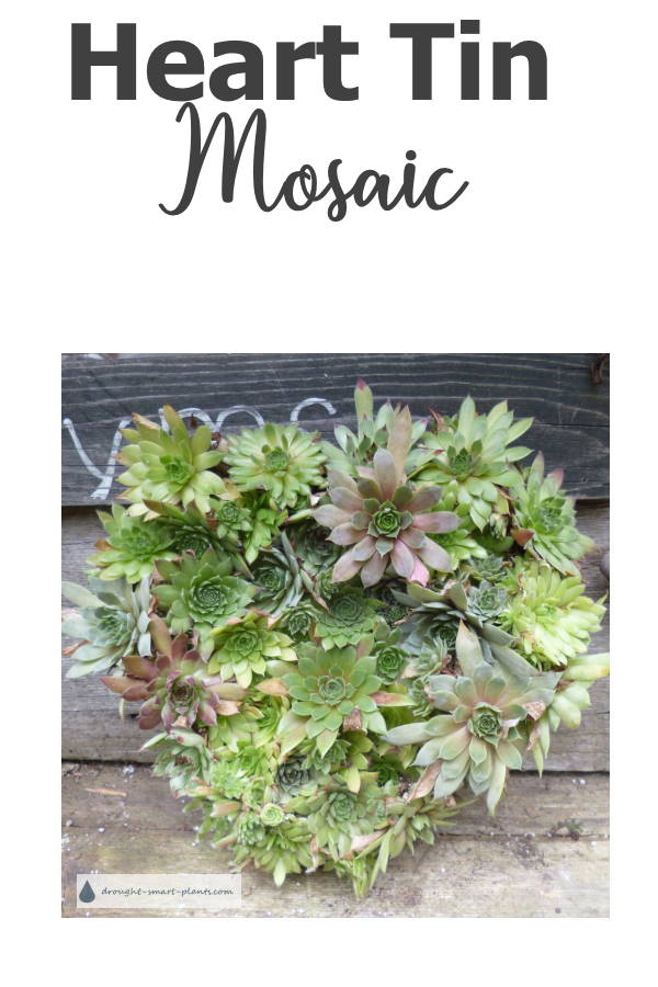 Heart Tin Mosaic - Succulents & Rustic
