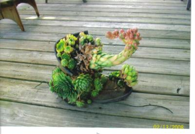 Is this a hens and chicks in a boot or a strange looking elephant?