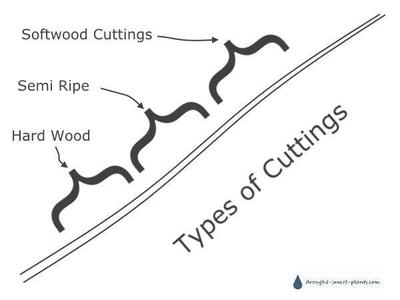 Types of Cuttings and where they come from