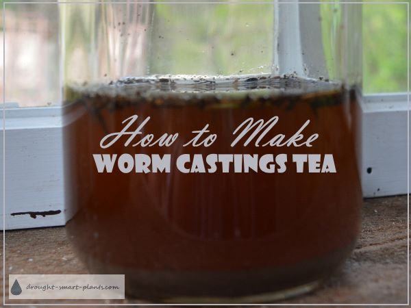 What Are Worm Castings - How To Make Worm Castings