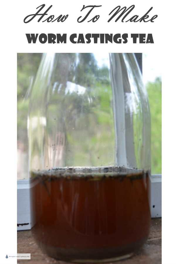 How to Make Worm Castings Tea