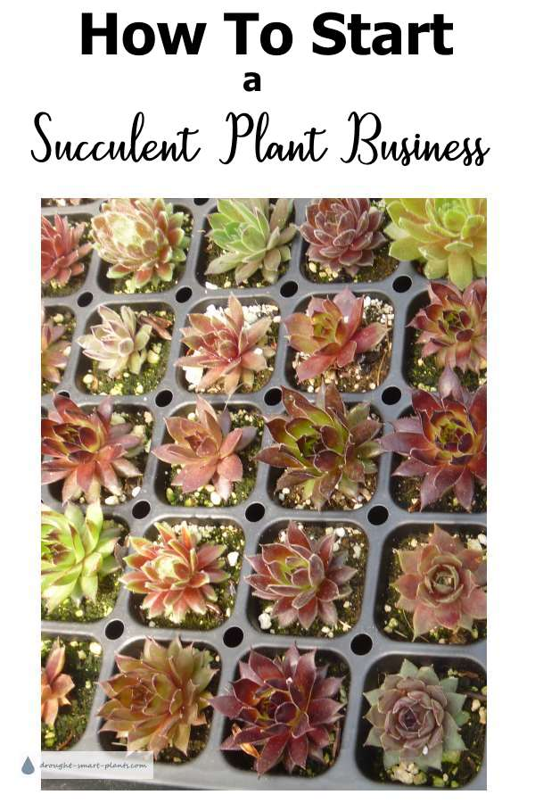 How To Start a Succulent Plant Business