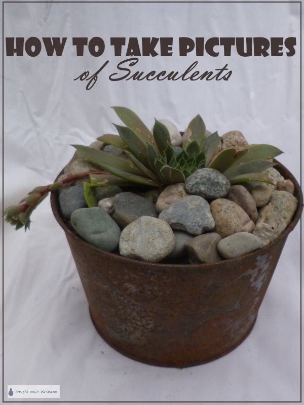How to Take Pictures of Succulents