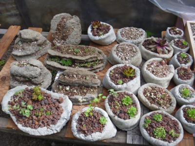 a whole collection of Hypertufa Pinch pots