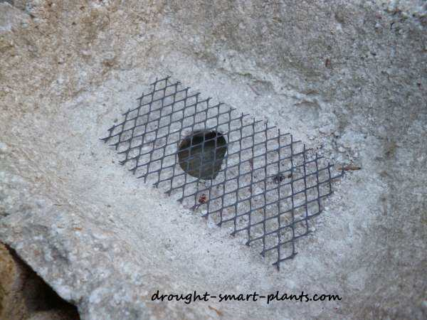 Covering the drain hole with mesh prevents problems with earth worms, slugs and the like...