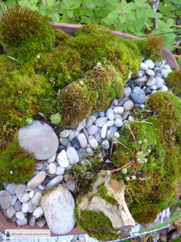 Tiny streambed, one foot square