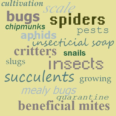 Succulent Plant Pests, and their treatment