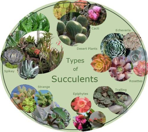 Types of succulents chubby spikey textured smooth - Home plants types ...