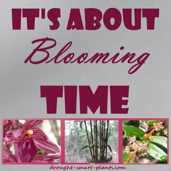 It's about Blooming Time - finally...
