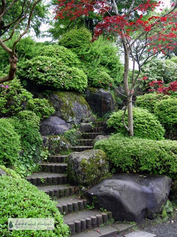 Japanese rock garden natures rugged beauty tamed for Japanese garden bushes